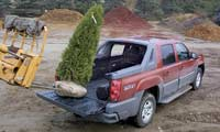0306 Pl 2002 Chevrolet Avalanche Pickup Truck Bed Tree