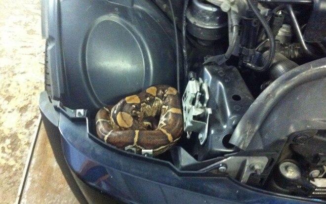 Mini Cooper Snake 660x413