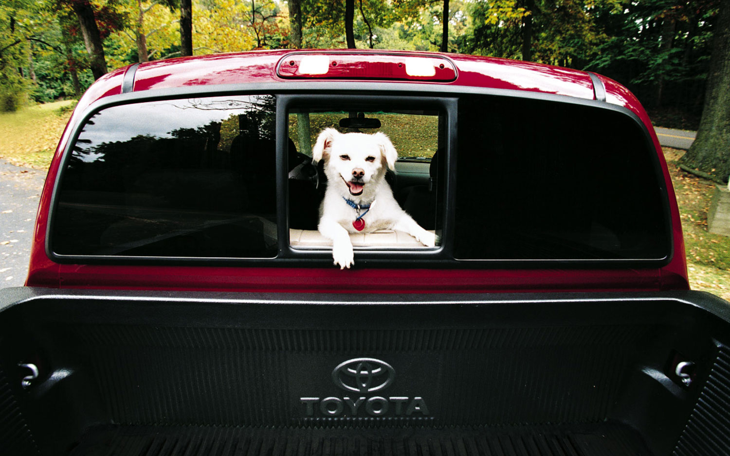 Toyota Tacoma With Dog1