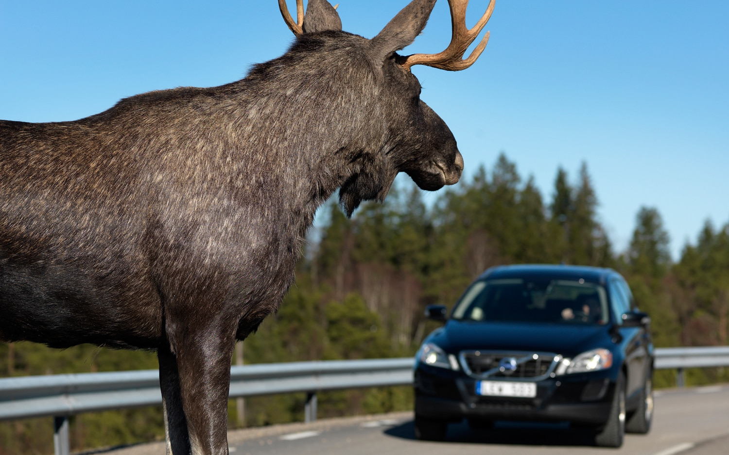 Volvo XC60 Moose Test 11