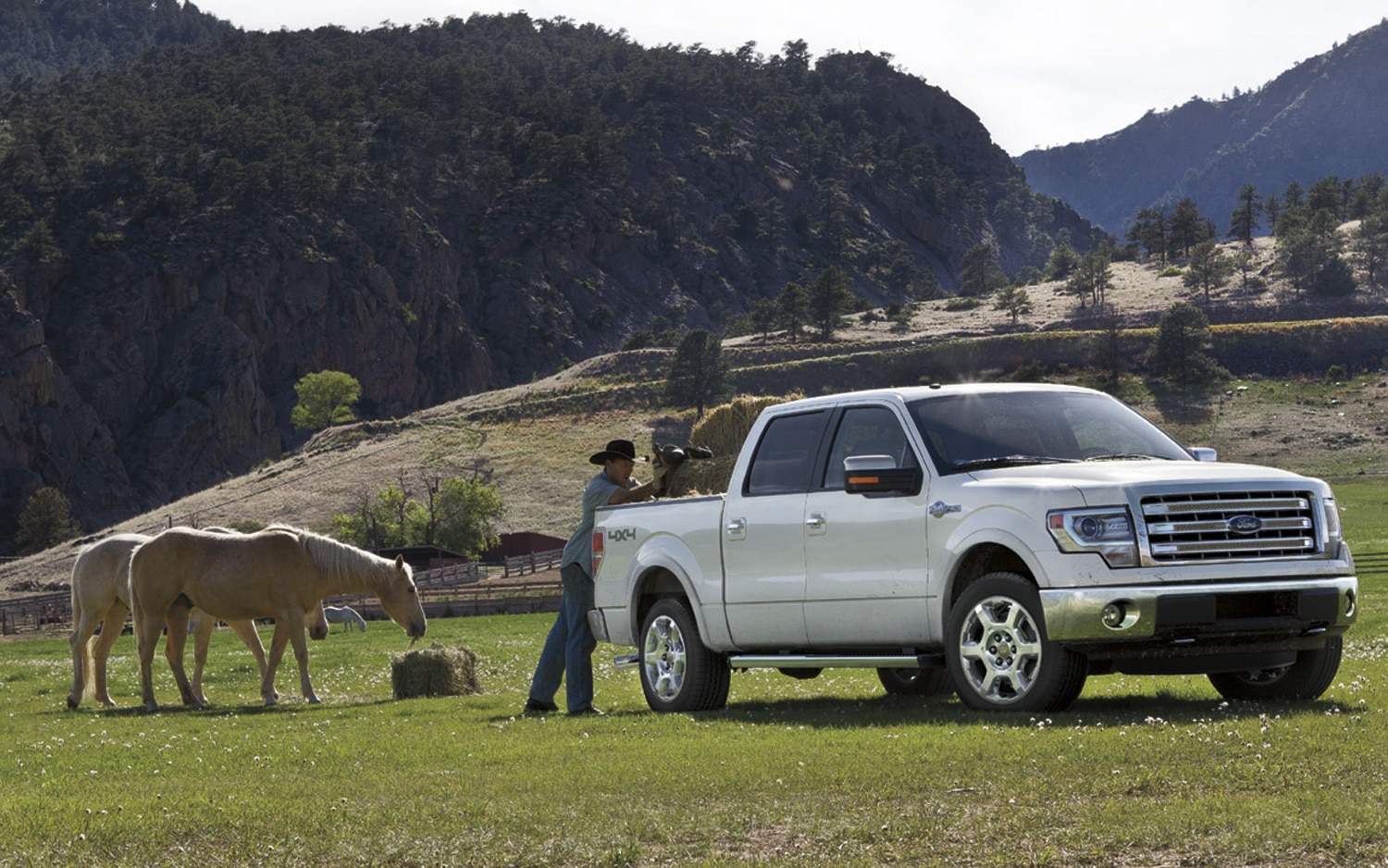 2013 Ford F 150 King Ranch Front View With Horse1
