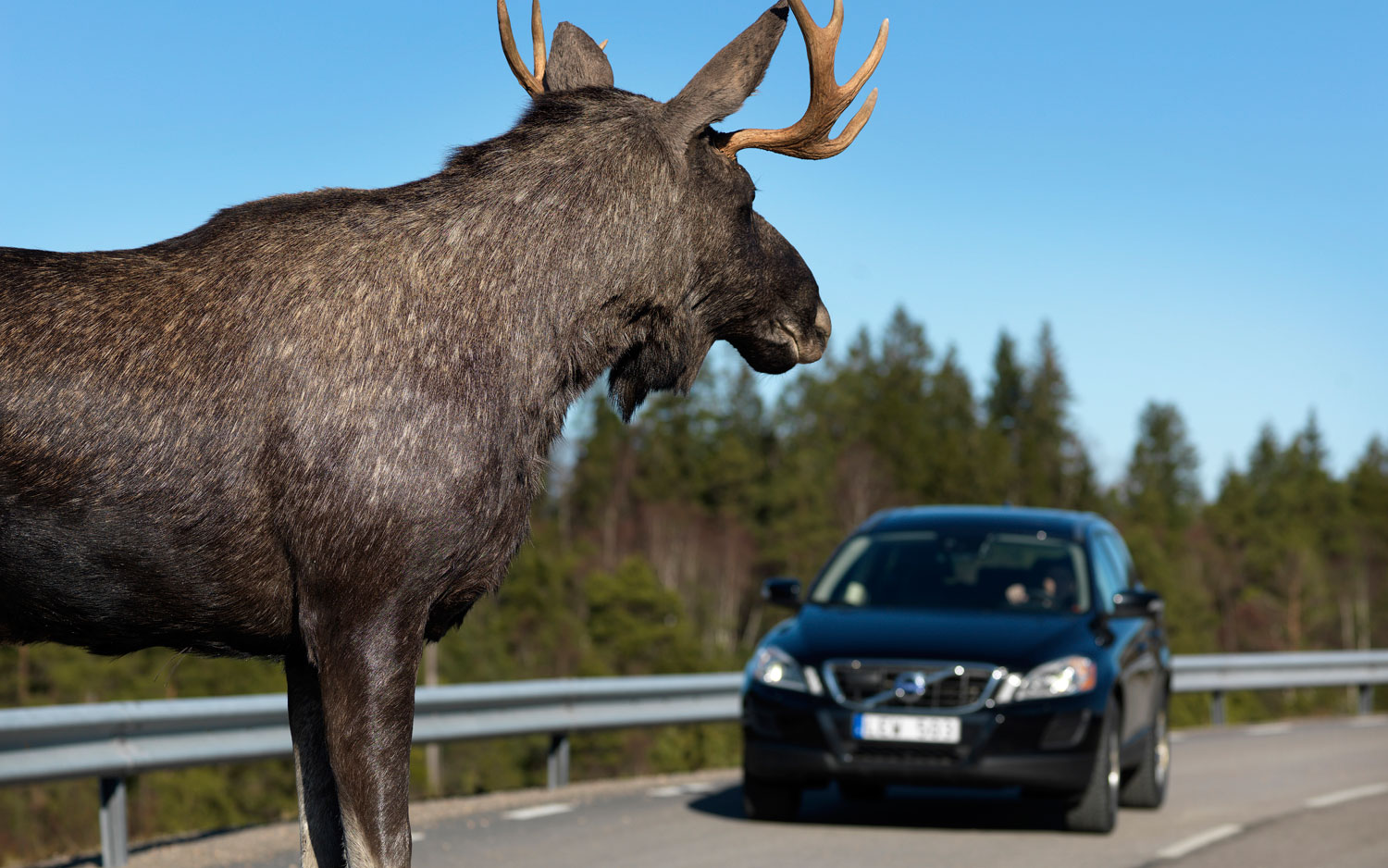 Volvo Wild Animal Detection Testing With Moose In Road1