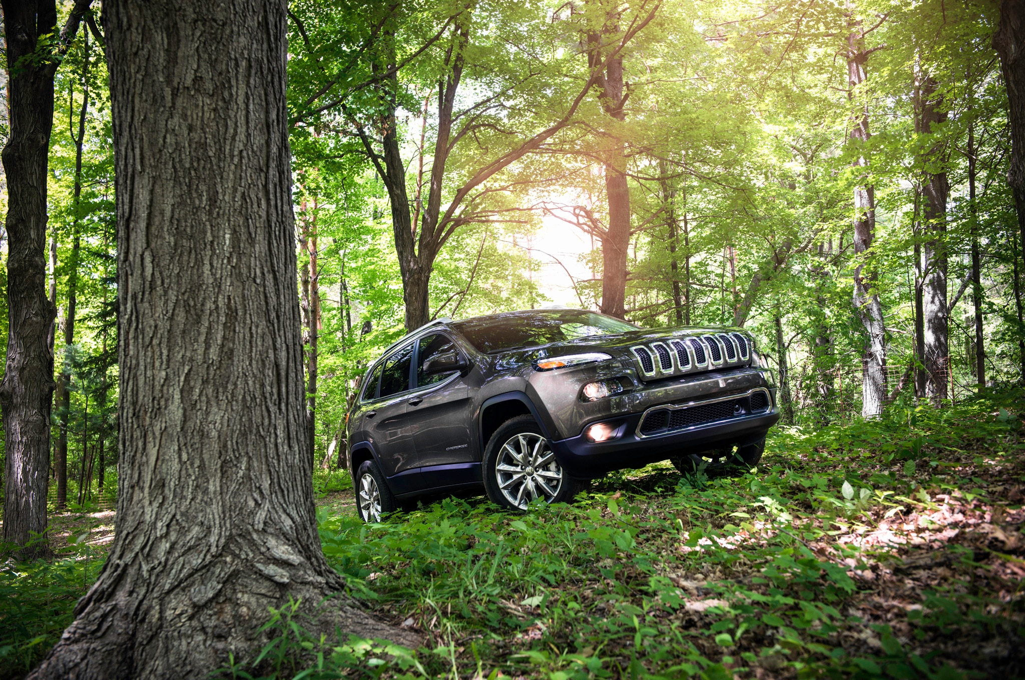2014 Jeep Cherokee Limited Front Three Quarters In Forest 021