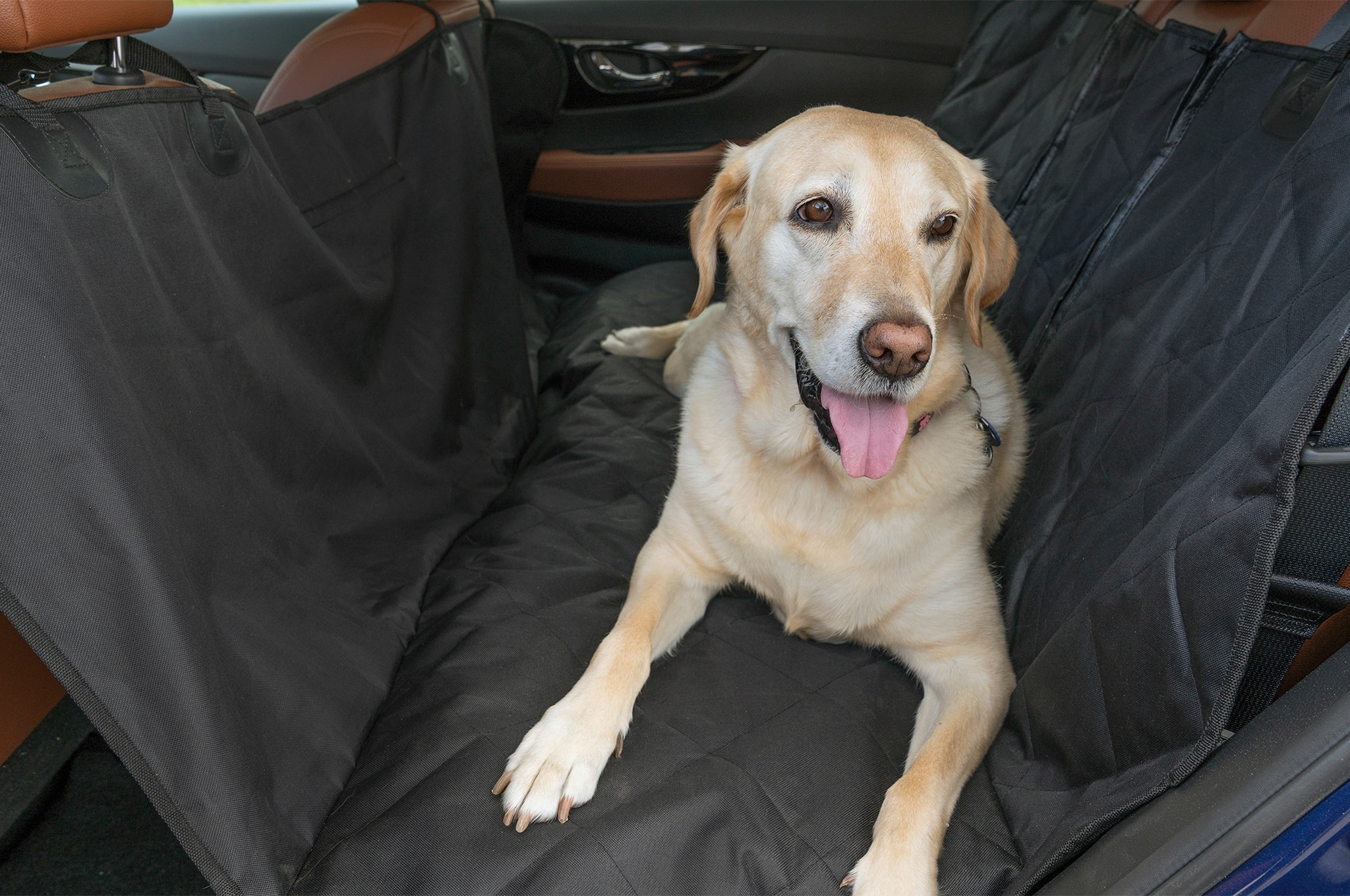 2017-Nissan-Rogue-Dogue-project-vehicle-pooch-relaxing-in-the-back-seat-01-1