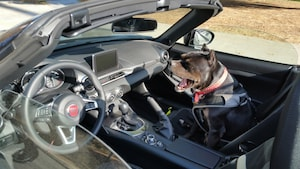 2018 Dogs Of Summer Gallery Bonnie Fiat