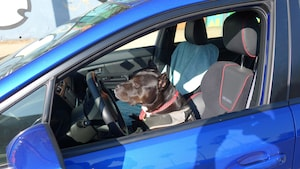 2018 Dogs Of Summer Gallery Bonnie WRX Close