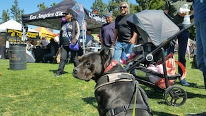 2018 Dogs Of Summer Gallery Bonnie
