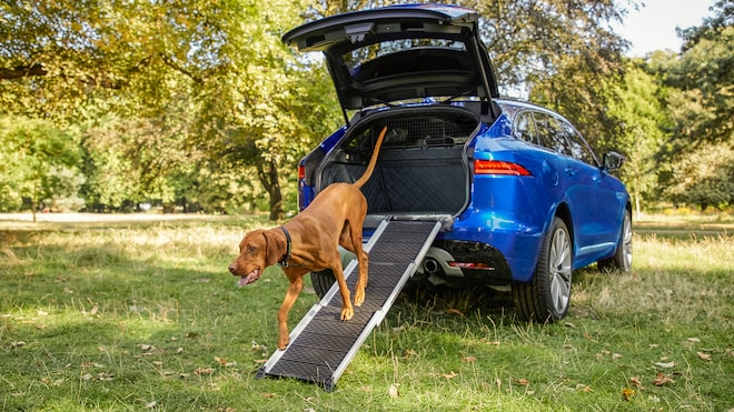 Jag_Pet_Products_F PACE_Ramp_Dog