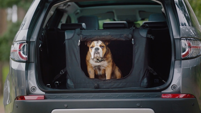 Land Rover Pet Accessories for National Dog Day Unleashed